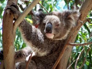 Linux Ubuntu 9.10 Karmic Koala Lanzamiento 29 de Octubre