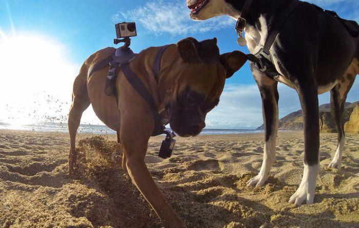 Arnés para perros GoPro Fetch anunciado